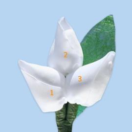 Tulp corsage met sizoflor blad groen - maatwerk