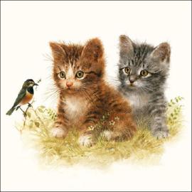 Kitten Friend
