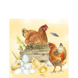 Breeding Chicken