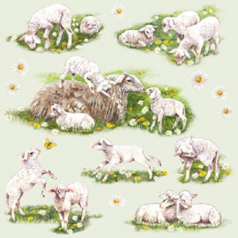 Spring with  Lambs