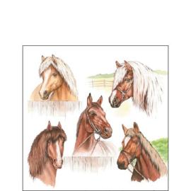 Horse Range