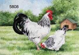 Light Sussex Cock & Hen