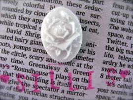 Sillis mal - cameo rose
