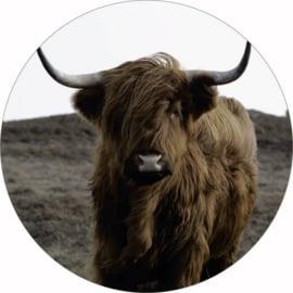 Buffel, 40cm