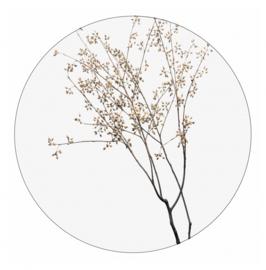 Dry plants,  30cm
