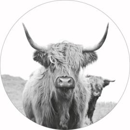 Buffel zwart wit, 40cm