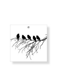 Vogeltjes (50)