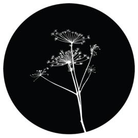 Berenklauw zwart,  30cm
