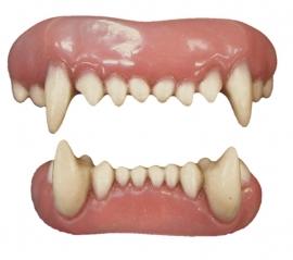 Tanden Animal