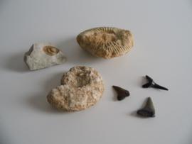 3 fossielen en haaientanden (Art.20-1625)