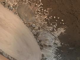 NR 18 Taupe schelpen