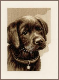 Telpakket Labrador pup