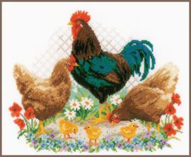 Telpakket Haan en kippen