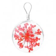 Bedel gedroogde bloem lichtrood/oranje