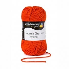 Catania Grande  3390 Tomato