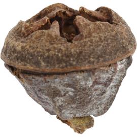 Larikskegels  25 gram