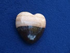 Versteend hout, hart HH22