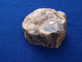 Versteend hout VH8