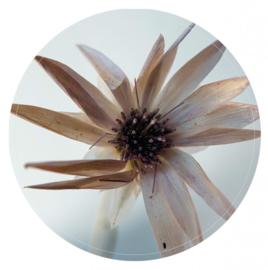 Muurcirkel Natural flower - 30 cm