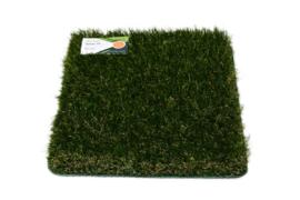 Grass Volley 35