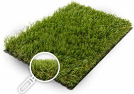 Gras van de Buren Ruby+non-directional