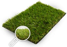 Gras van de Buren Olympus Budget