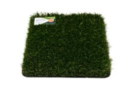 Grass Agressive Wonder 34