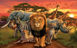 African Beast