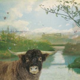 Schuttingdoek 180x180 cm - stier
