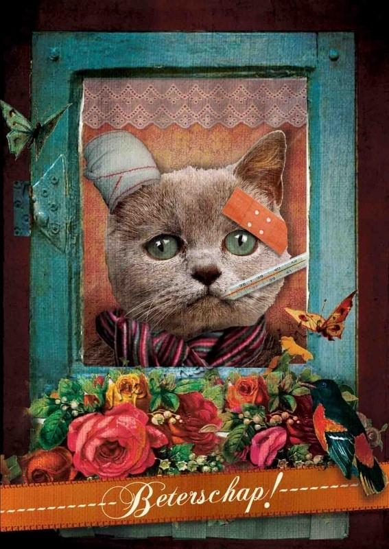 31 - Beterschaps Kat