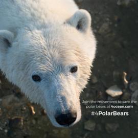 4Ocean armband ijsbeer