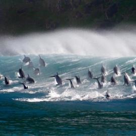Kaart erbij! Dolfijnen