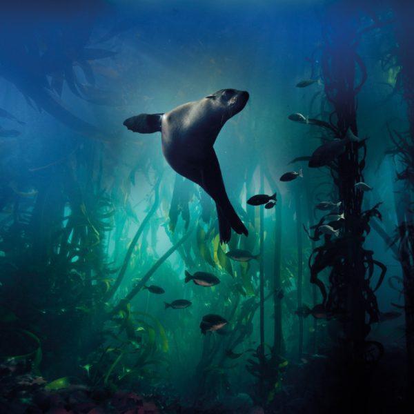 Card Galapagos Sea Lion