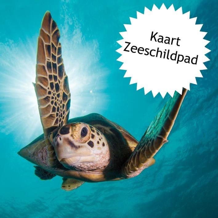 4Ocean zeeschildpad kaartje erbij