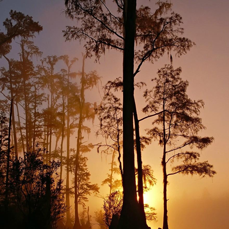 Everglades natuurgebied