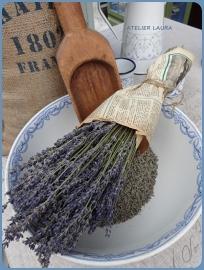 Lavendel Struikjes