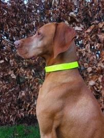 Reflectie Honden Halsband 180920