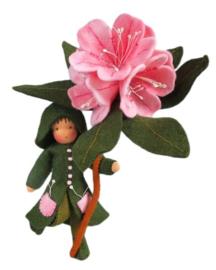 Rhododendron Pippilotta