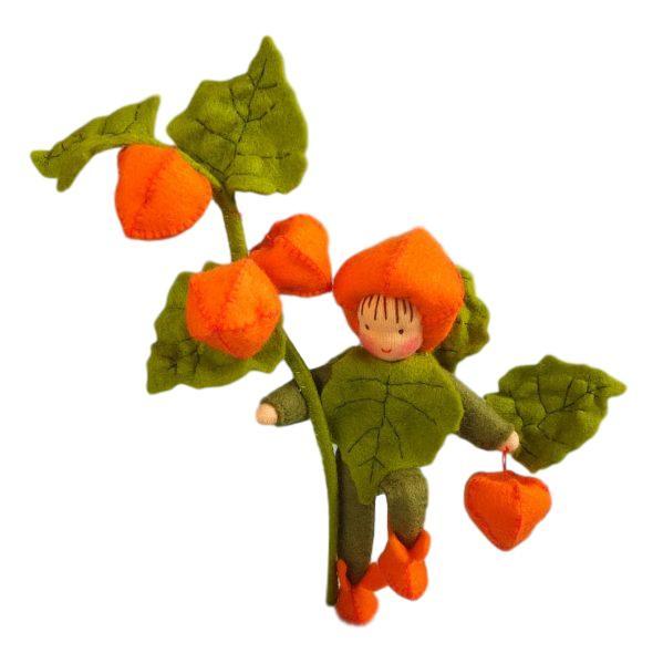 Lampionplantje Pippilotta
