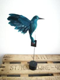 Blauwe vogel op voet