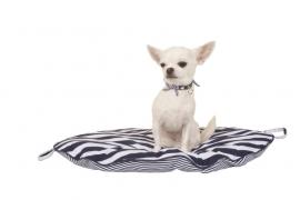 DogVipstar Sail Sleep honden/katten kussen