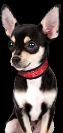 Koelhalsband hond