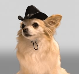 Puppe Love Cowboy hondenhoedje, Donker Blauw
