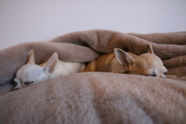 Doggieyou Dreamiezz Taupe Maat S