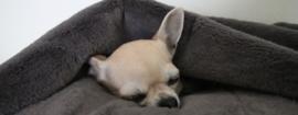Doggieyou Dreamiezz Antraciet Maat S