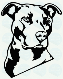 auto sticker • pitbull