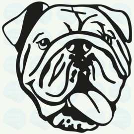 individueel project • engelse bulldog