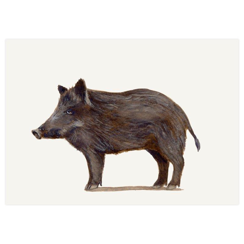 Stokwolf kaart Everzwijn