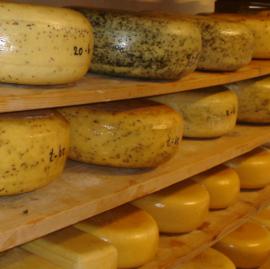 Käse 2, 3 oder 4 kilo Jung Belegt