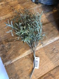 Groen takje olijfgroen van Brynxz